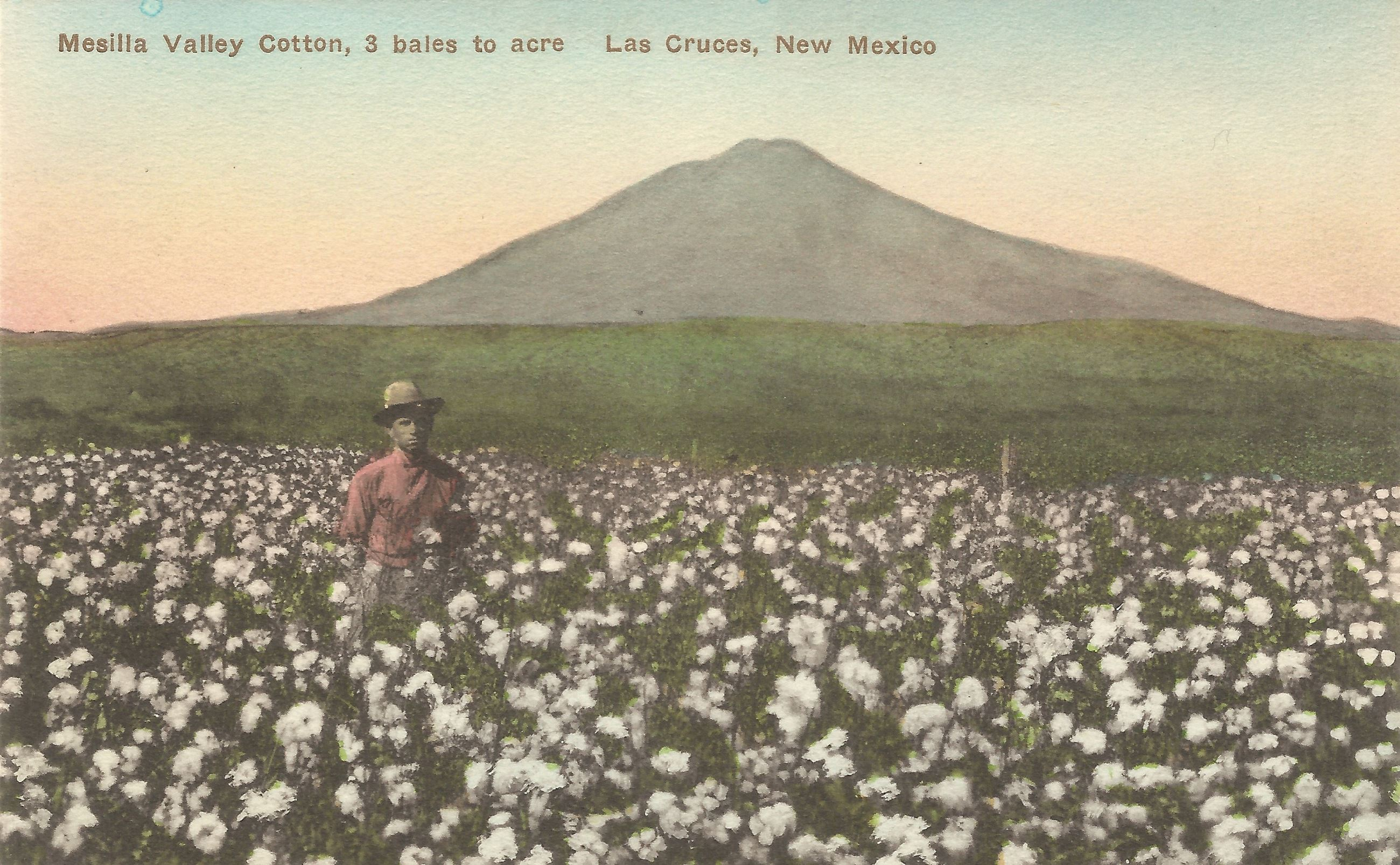 6. Cotton field with Picacho Peak
